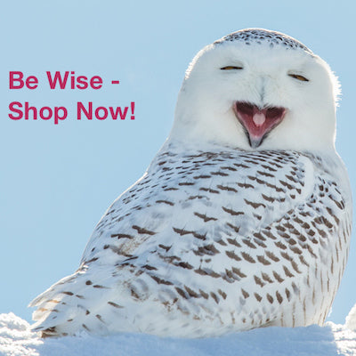 Be Wise Shop Now for Holiday