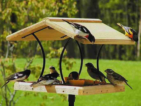 Bird Feeding Popularity