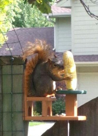 Table & Chair Squirrel Feeder in Use