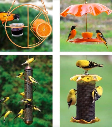 Shop Oriole and Thistle Bird Feeders