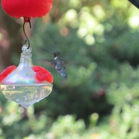 Leave a hummingbird feeder up in fall