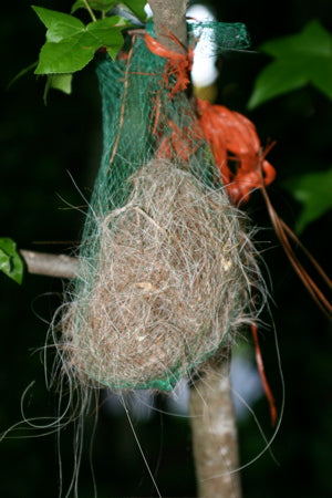 Horse hair is a favorite for soft nests