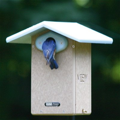 Recycled Plastic Bluebird House with BirdCam