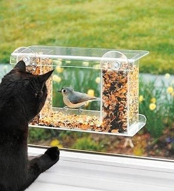 Cat enjoys his window bird feeder