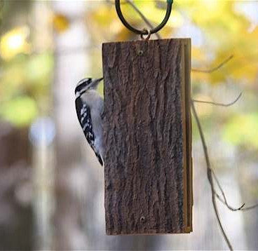 Suet Sandwich Bird Feeder