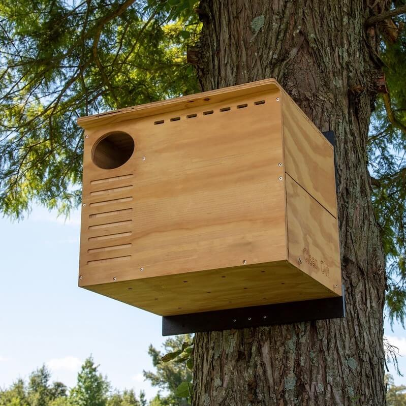 Barn Owl House- New and Improved
