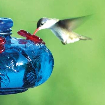 Bloom Perch Hummingbird Feeder- Aqua