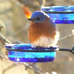 Bluebird Bird Feeder