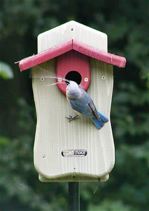 Bluebird House Side Door Nabs Approved The Birdhouse Chick