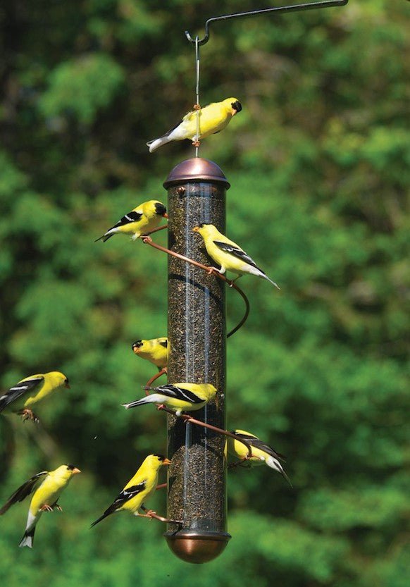 feeder watch feeders finch zebra youtube