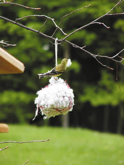 cotton nesting ball � the birdhouse chick