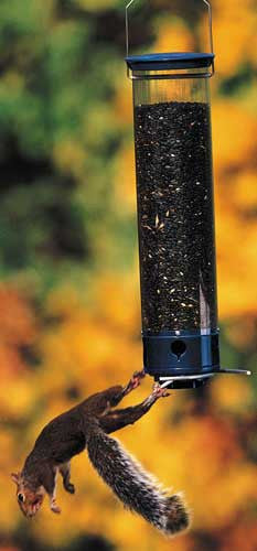 Yankee Whipper Squirrel Proof Bird Feeder