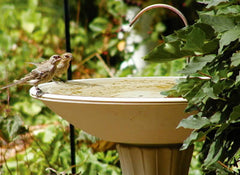Bird Bath Dripper in action