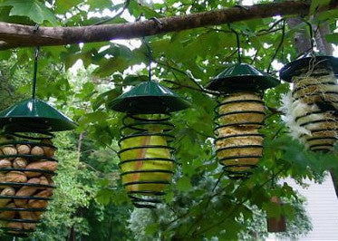 Fun Spring Fruit Feeder & More