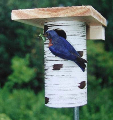 Gilbertson Nest Box- NABS Approved