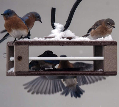 Gilbertson Hanging Bluebird Feeder