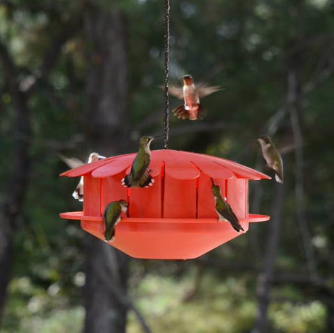 Humm-Bug Protein Hummingbird Feeder