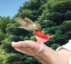 Hand Feed Hummingbirds with a Hummer Ring