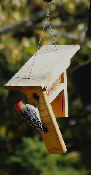 Clinger Woodpecker And Peanut Feeder The Birdhouse Chick