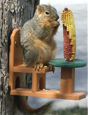 Table and Chair Squirrel Feeder in Recycled Plastic