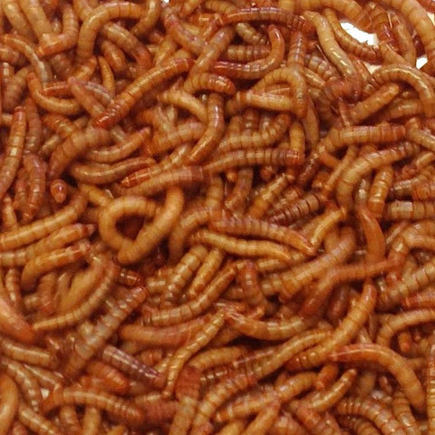 Live Mealworms-Bulk Options