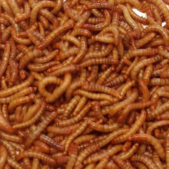 Live Mealworms-5000 or 10,000 Count