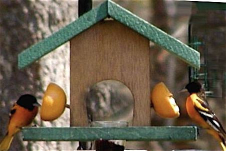 Oriole Feeder Cedar-Fruit & Jelly