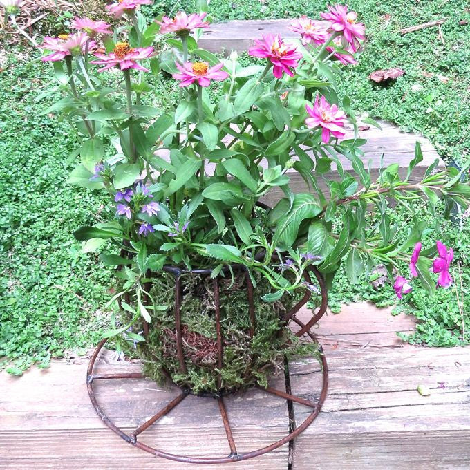 Rustic Tea Cup Planter