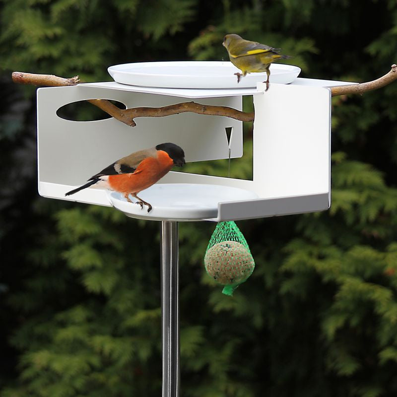 Unique Bird Bath/Bird Feeder