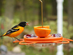 Oriolefest Bird Feeder