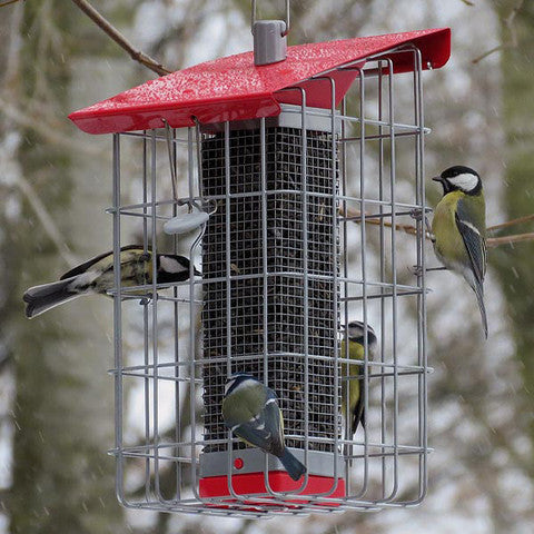 Tall Cage Feeder Nuttery Caged Peanut Feeders Peanut