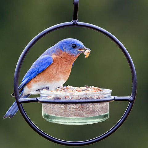 Orb Mealworm & Multi-Use Bird Feeder