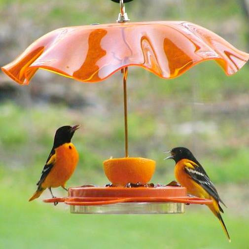 Oriolefest Bird Feeder shown with Weather Guard
