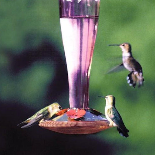 Paradise Amethyst Glass Hummingbird Feeder