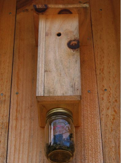 Carpenter Bee Trap The Birdhouse Chick