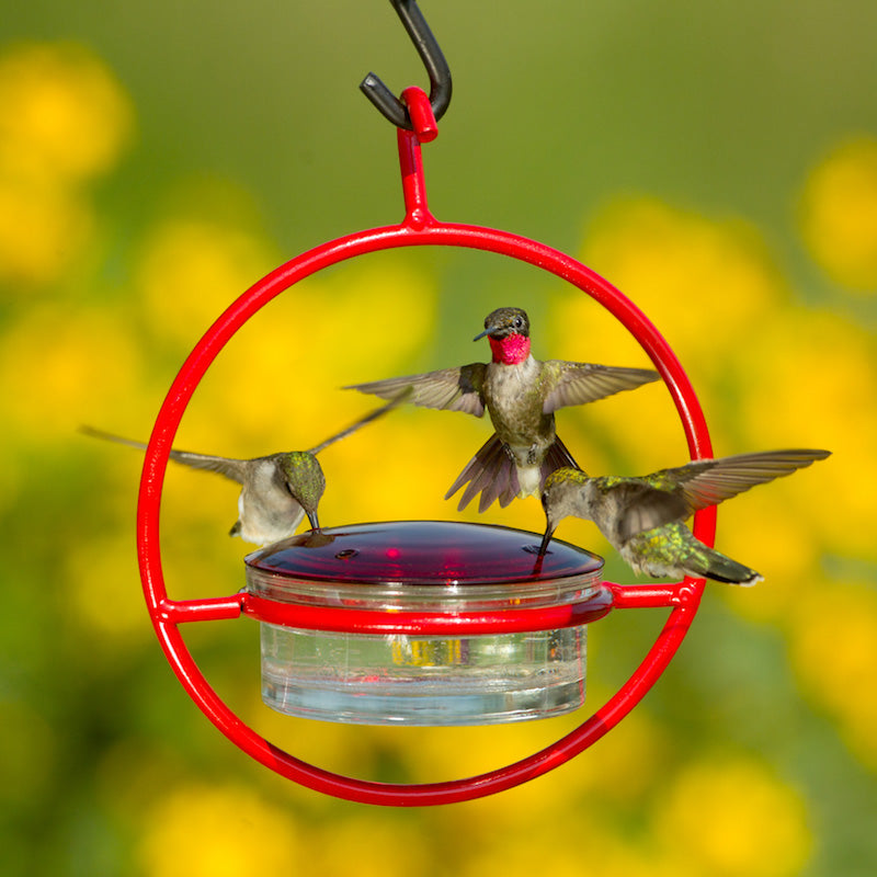 Red Orb with Perch Hummingbird Feeder