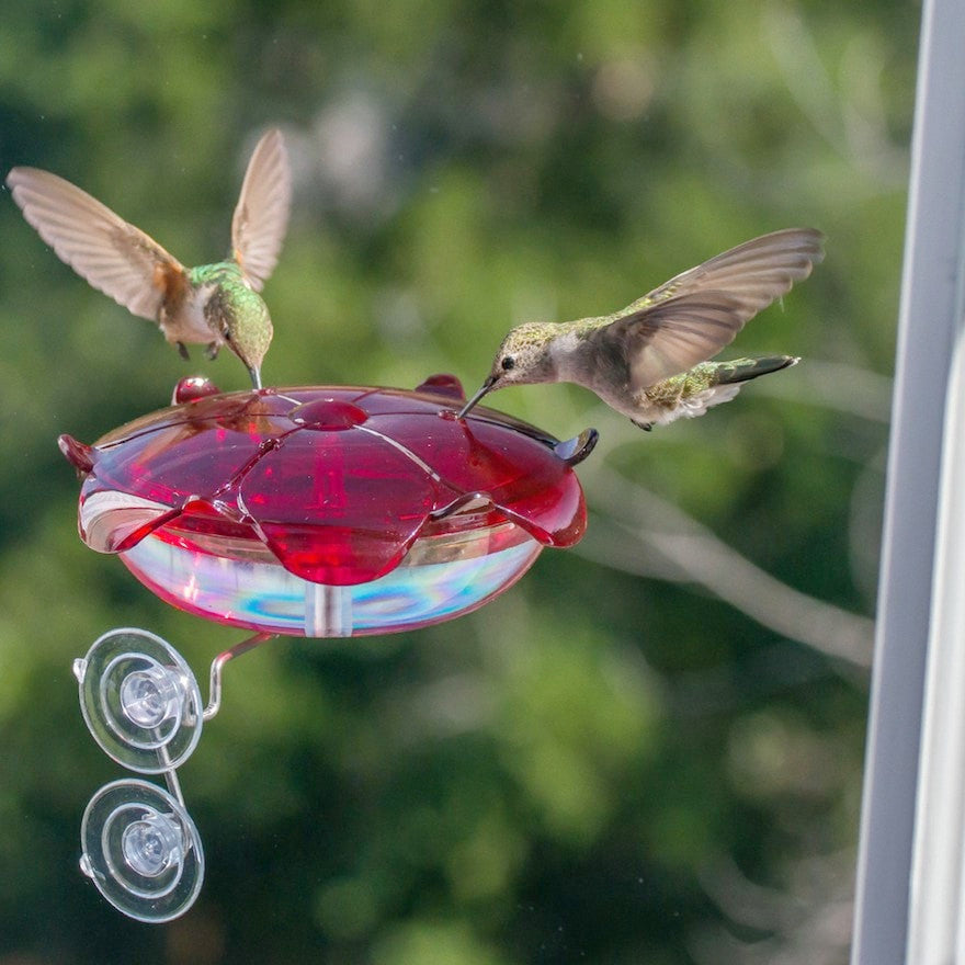 Window Hummingbird Feeder