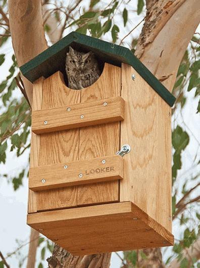 Owl House for Screech, Saw-whets, Kestrels and Flickers- All Cedar Option