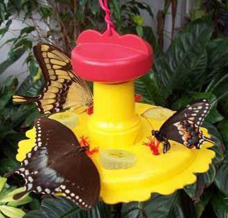 Butterfly Feeder with Nectar - Hang or Pole Mount
