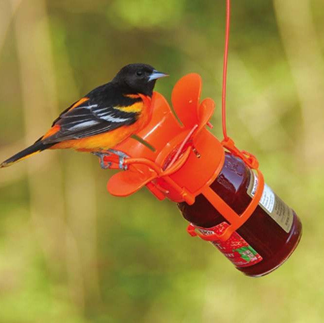 Fun Jelly & Jam Feeder for Orioles and More