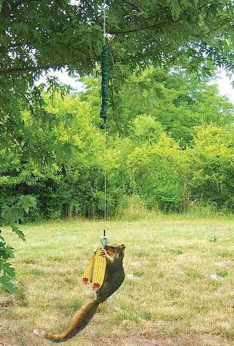 Bungee Cord Deluxe Squirrel Feeder