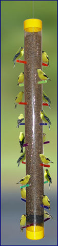 Super Rainbow Finch Feeder