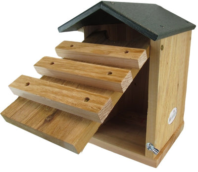 Screech Owl House with Poly Roof-Box Detail
