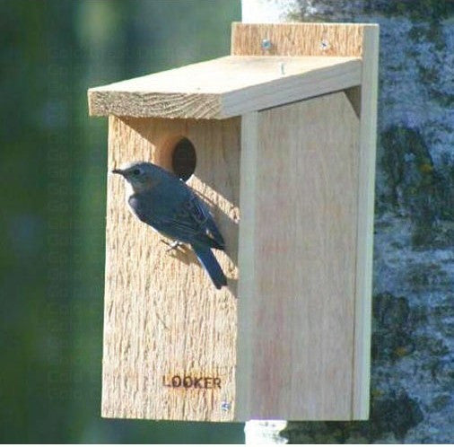 View-Thru Bluebird House - NABS Approved