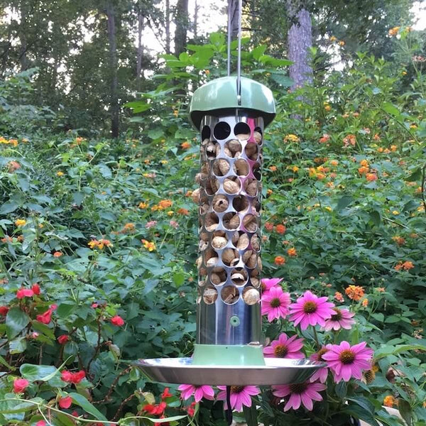 Stainless Steel Whole Peanut Bird Feeder Peanut In Shell