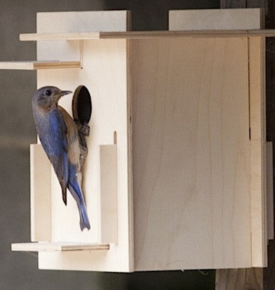 Box For Birds Birdhouse Kit- Modern