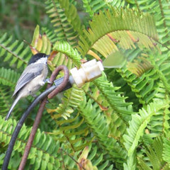 Chickadee on Leaf Mister