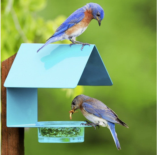 Fence Post Sheltered Bluebird Feeder
