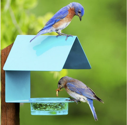 Fence-Post Sheltered Bluebird Feeder