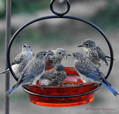 Hanging Glass Dish Feeder/Bird Bath